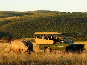 Rhino conservation at Shamwari Game Reserve
