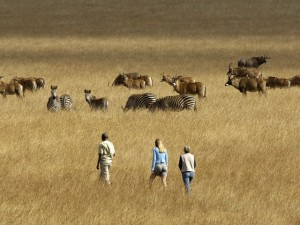 Malawi safari - walking on the Nyika Plateau